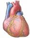congestive heart failure in elderly